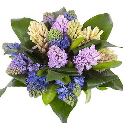 davana slimniekam, skaists ziedu puskis slimam cilvēkam, piegada ziedus uz slimnicu