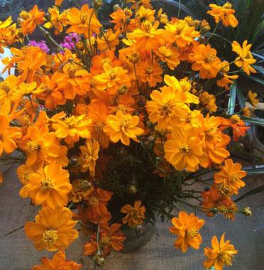 Koši rudens ziedi ar piegādi