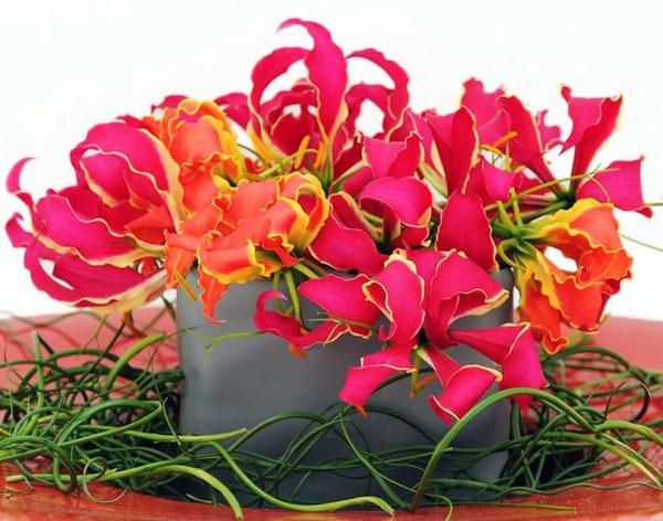 ziedu-piegade-gloriosa