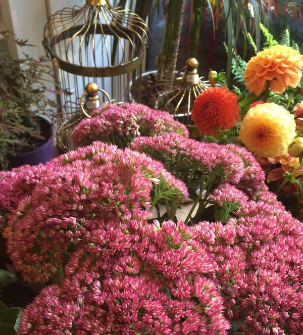 ziedu-piegade-rudens-sezona