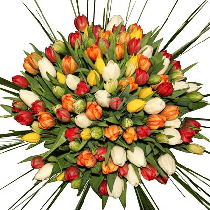 101 krāsaina tulpe