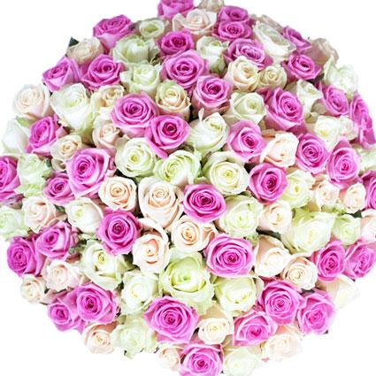 101 rozā, balta un krēmkrāsas roze