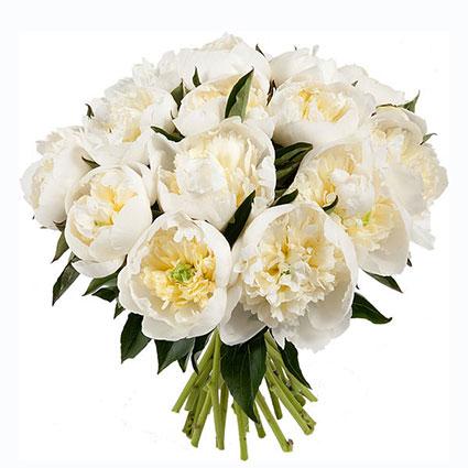 Ziedu veikals. Ziedu pušķī 15 baltas peonijas.  Ziedu klāsts ir ļoti plašs. Var gadīties, ka izvēlētie ziedi var nebūt