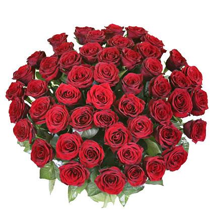 Ziedi ar kurjeru. 55 sarkanas rozes lieliskā pušķī. Rožu garums 60 cm.  Ziedu klāsts ir ļoti plašs. Var gadīties, ka