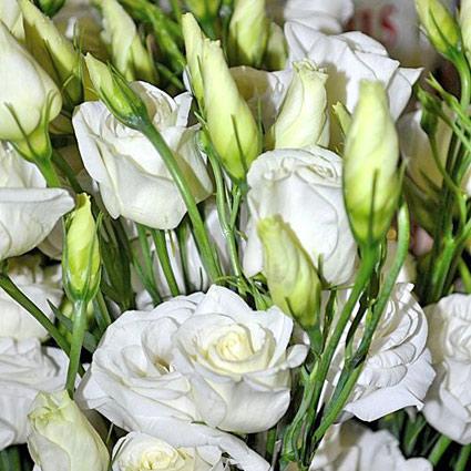 Ziedi: Baltas lizantes. Izveido savu ziedu pušķi!