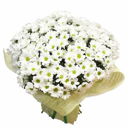 Ziedi: Baltā simfonija
