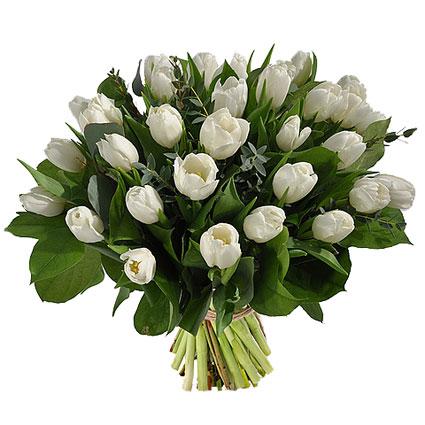 Ziedi ar piegādi. Apjomīgā ziedu pušķī 31 balta tulpe ar atsvaidzinošiem eikalipta zaļumu akcentiem.  Ziedu klāsts ir ļoti
