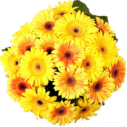 Ziedi Rīga. Ziedu pušķī 25 dažādu nokrāsu dzeltenas gerberas.  Ziedu klāsts ir ļoti plašs. Var gadīties, ka izvēlētie