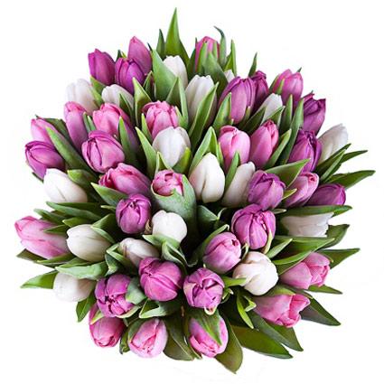 Pušķī 45 baltas, rozā un violetas tulpes.