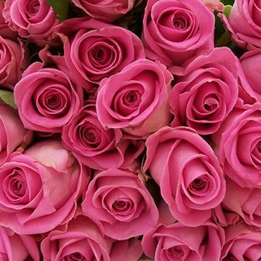 Ziedi: Rozā rozes 50-60 cm