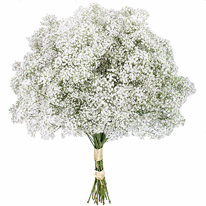 Ziedi: Baltās mežģīnes