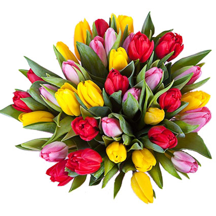 Flower delivery. Bouquet of 35 red, yellow and pink tulips.