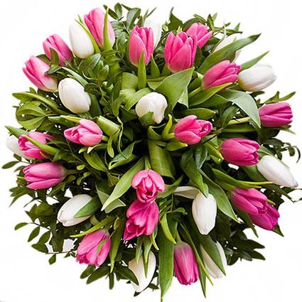 Ziedi Latvijā. Baltu un rozā tulpju pušķis. Mazākajā pušķī 17 tulpes un dekoratīvi zaļumi, lielākajā - 25 tulpes un