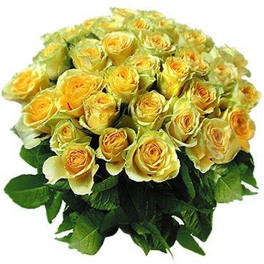 Розы: Янтарный берег