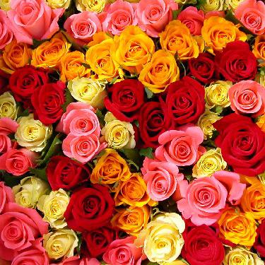 Ziedi: Dažādu krāsu rozes. Izveido savu rožu pušķi!