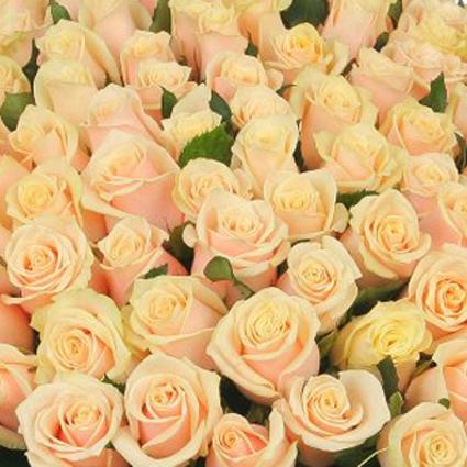 Ziedi: Kremkrāsas rozes 70-80 cm