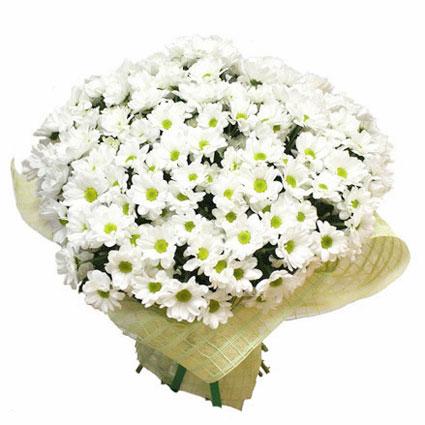 Ziedi. 25 baltas krizantēmas dekoratīvā saiņojumā.  Ziedu klāsts ir ļoti plašs. Var gadīties, ka izvēlētie ziedi var nebūt