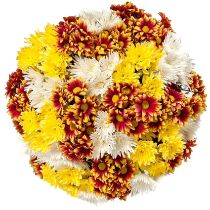 Ziedi un to piegāde. Pušķis no dzeltenām, baltām un raibām krizantēmām. Lielākajā pušķī 23 ziedi, mazākajā - 17 ziedi.