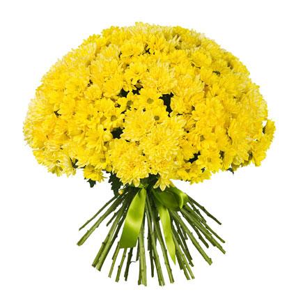 Ziedu piegāde Latvijā. Apjomīgs ziedu pušķis no 45 dzeltenām krizantēmām.  Ziedu klāsts ir ļoti plašs. Var gadīties, ka