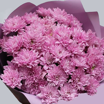 Bouquet of 15 pink chrysanthemums.