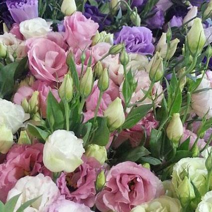 Ziedi: Dažādu krāsu lizantes