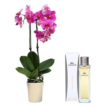 Цветы и духи LACOSTE Pour Femme EDP 90 мл