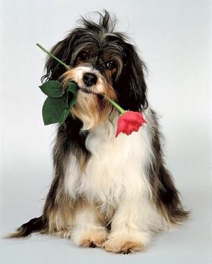 Ziedi Latvijā. Grūti izvēlēties -  ļaujiet mūsu floristiem piedāvāt savu risinājumu. Pušķa cena 24.99 vai 34.99 Eur.