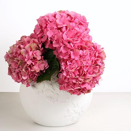 Ziedi Rīga. Trīs rozā hortenzijas un Kaiser Porzellan vāze Papillon 25 cm.