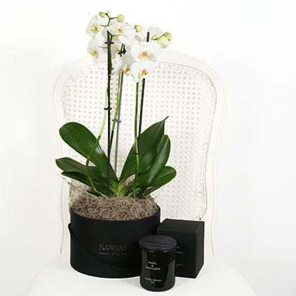 Dāvanu komplekts: Balta orhideja ziedu kārbā un aromātiska svece