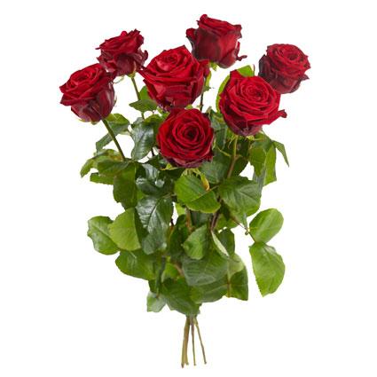 Pušķī 7 sarkanas rozes