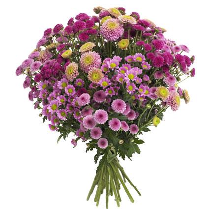 Ziedi un to piegāde. Pušķis veidots no 19 smalkziedu krizantēmām violeti rozā nokrāsās.  Ziedu klāsts ir ļoti plašs. Var