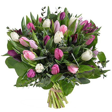 Flower delivery. Spring flowers bouquet of 31 white, pink and purple tulips with decorative foliage.