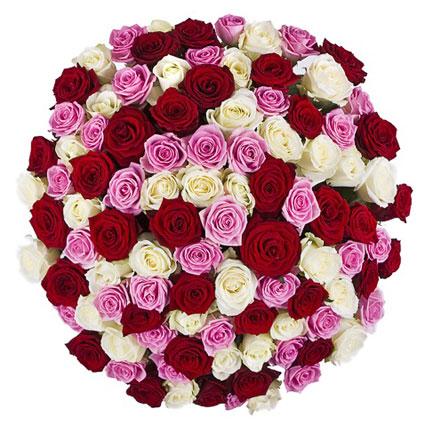 Ziedu piegāde Latvijā. Elegantajā rožu pušķī 101 vai 51 sarkanas, rozā un baltas rozes. Rožu garums 60 cm.  Ziedu klāsts