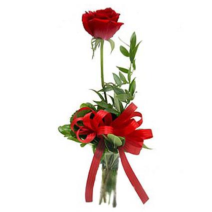 Цветы он-лайн. Красная роза с декоратвной зеленью. Длина розы 60 см.