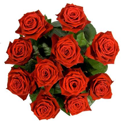 Магазин цветов. 11 красных роз.