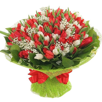 Flowers in Riga. Red and white tulips with decorative foliage. The bigger bouquet includes 61 tulip, the smaller one of 33