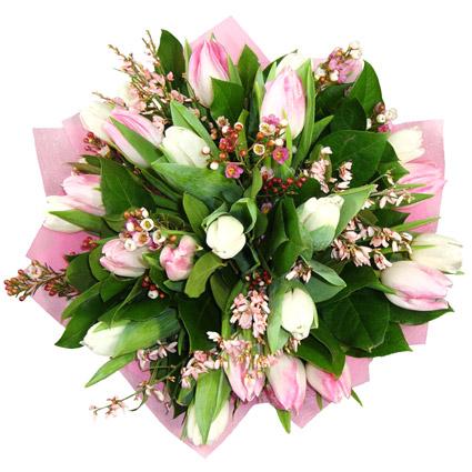 Ziedi. Pavasara ziedu pušķis no rozā un baltām tulpēm. Pušķī 21  tulpe ar rozā un baltiem smalkziediem dekoratīvā