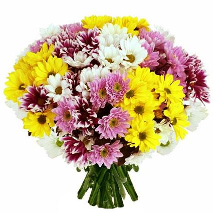 Ziedi ar piegādi. Pušķī 27 krizantēmas četrās dažādās krāsās: baltā, dzeltenā, rozā un tumši sārtā.  Ziedu klāsts ir ļoti