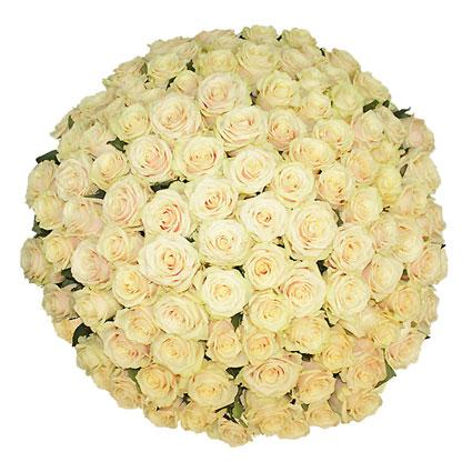 Ziedi ar kurjeru. Brīnišķīgs pušķis no 101 kremkrāsas rozes.  Ziedu klāsts ir ļoti plašs. Var gadīties, ka izvēlētie ziedi
