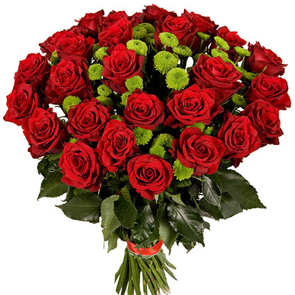Ziedu piegāde Rīgā. Greznajā pušķī 15 vai 29 sarkanas 60 cm garas rozes un zaļās sīkziedu krizantēmas.  Ziedu klāsts ir