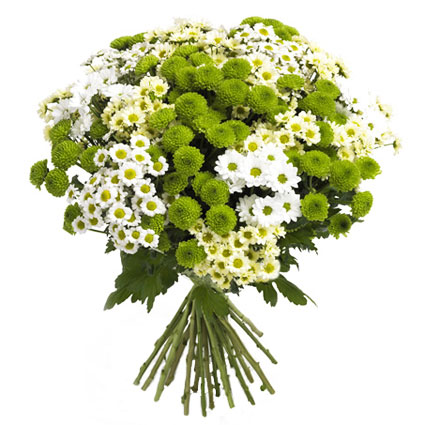 Flower delivery. Bouquet in white and green colors created of 21 spray chrysanthemums.