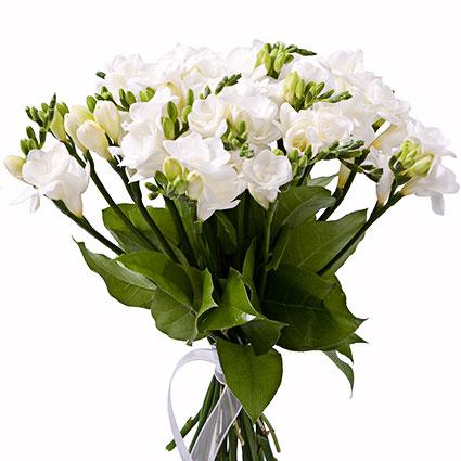 Ziedi Latvijā. Ziedu pušķī 15 vai 25 baltas frēzijas.  Ziedu klāsts ir ļoti plašs. Var gadīties, ka izvēlētie ziedi var