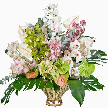 Ziedi. Karaliskās orhidejas un eksotiskās antūrijas maigos toņos bagātīgā kompozīcijā ziedu grozā. Grezni! Kompozīcijā 9