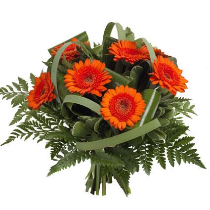Ziedi ar piegādi. Sastāvs: septiņas oranži sarkanas gerberas, dekoratīvi zaļumi.   Ziedu klāsts ir ļoti plašs. Var