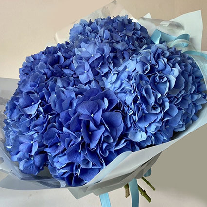 Ziedu pušķī 5 zilas hortenzijas dekoratīvā saiņojumā.