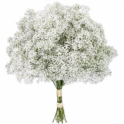 Ziedu piegāde. Ekstravagants, gaisīgs un neparasts ziedu pušķis veidots no baltas plīvurpuķes.  Ziedu klāsts ir ļoti