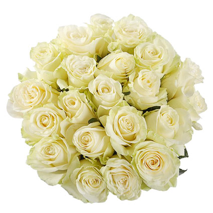 Bouquet of 21 white roses. Rose length 60 cm. Flower delivery to Riga.