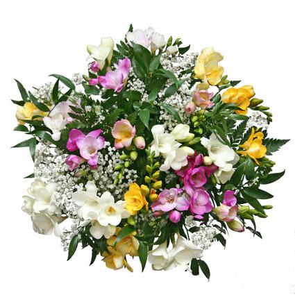 Ziedi Latvijā. Pušķis no 25 krāsainām, smaržīgām frēzijām un baltiem smalkziediem - priekam un pavasarim sirdī.  Ziedu