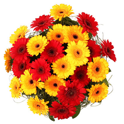 Flower delivery Latvia. Bouquet of 25 or 19 red and yellow gerberas and decorative foliage. The biggest flower bouquet is