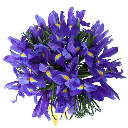 Ziedi ar kurjeru. Pušķī 15 zili īrisi un dekoratīvi zaļumi.  Ziedu klāsts ir ļoti plašs. Var gadīties, ka izvēlētie ziedi